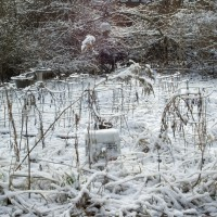 photo of garden and yard under snow