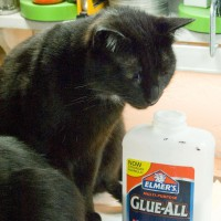 black cat sniffing glue bottle