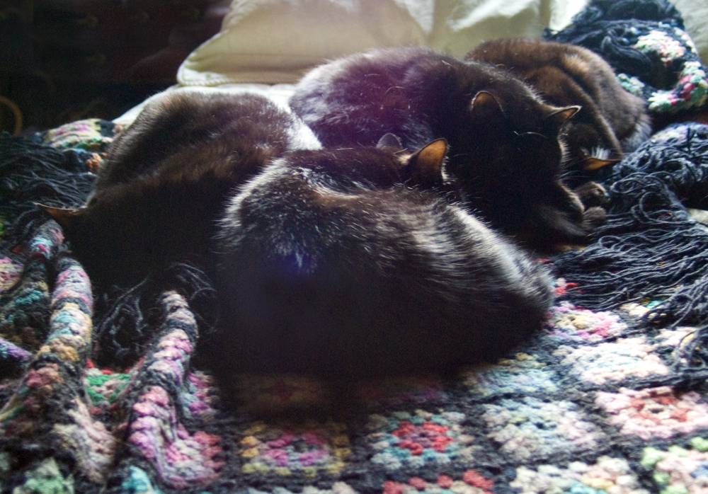 four black cats on wool afghan