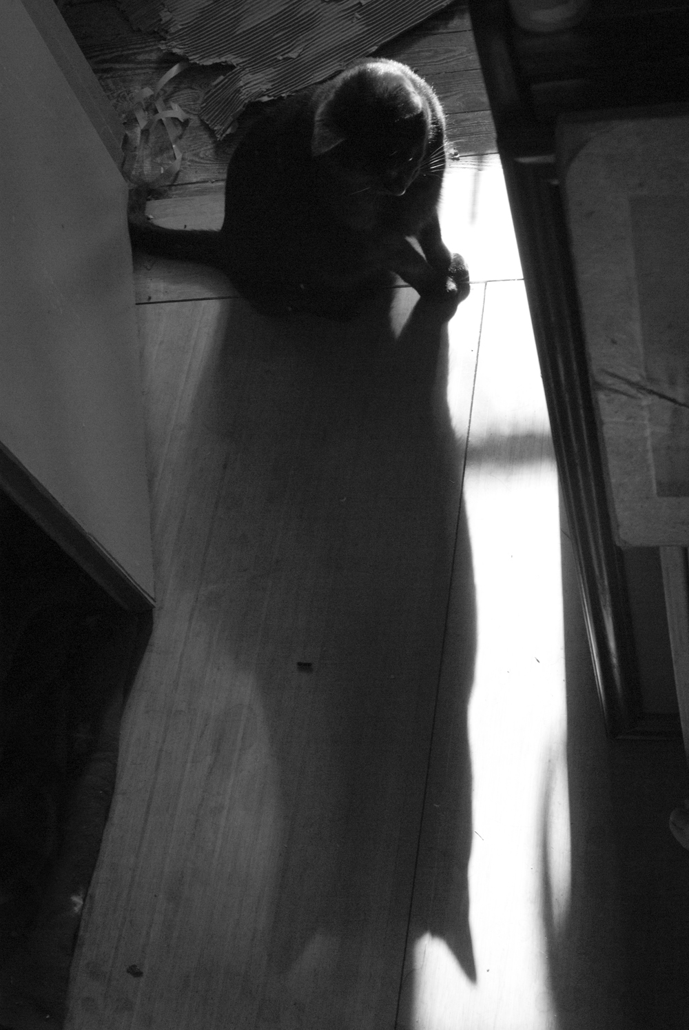 black and white of blakc cat with shadow