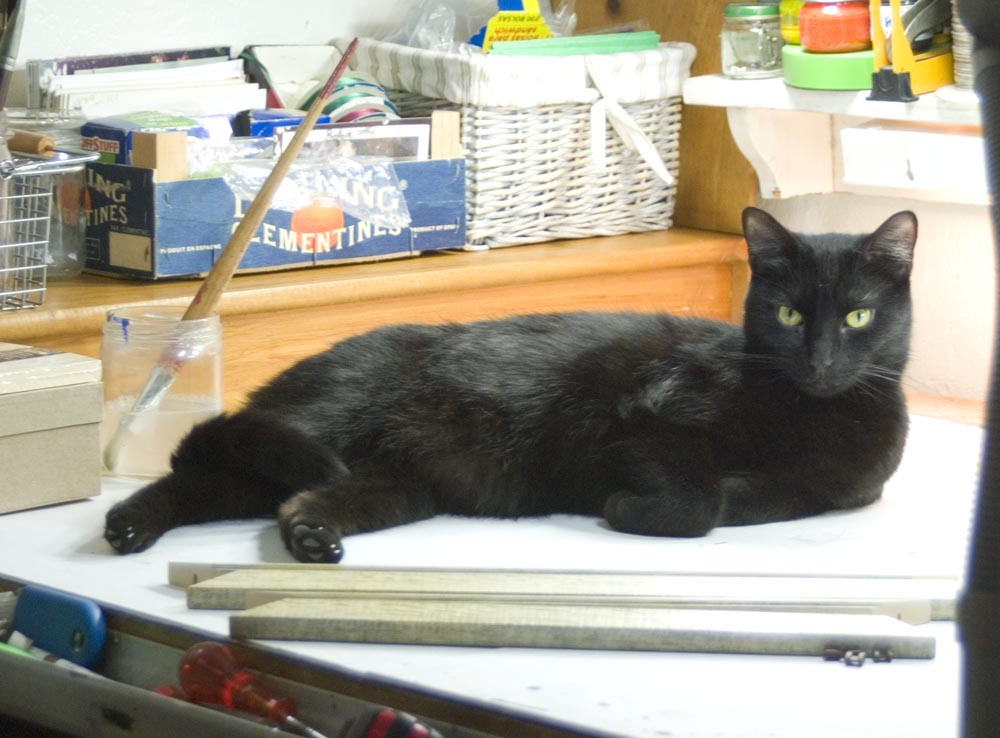 black cat on work table