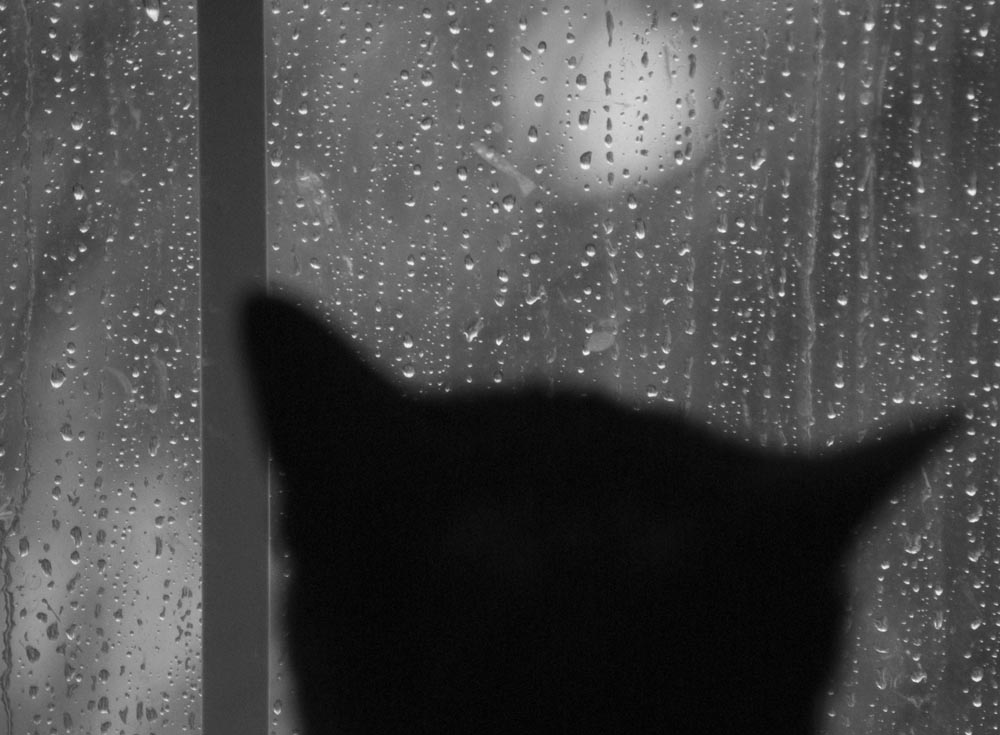 cat in the rain by ernest Cat in the rain cat in the rain ernest hemingway there were only two americans stopping at the hotel they did not know any of the people they passed on the stairs.