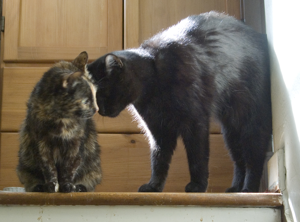 two cats at top of stairs