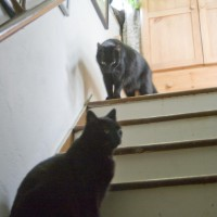 Three black cats on steps.