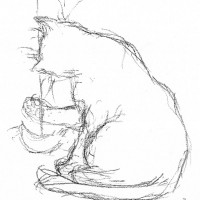 charcoal sketch of cat with toy