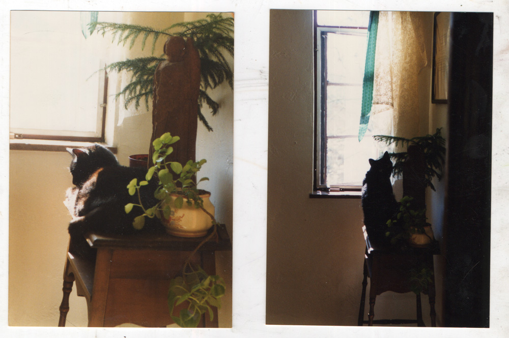 black cat on table by window