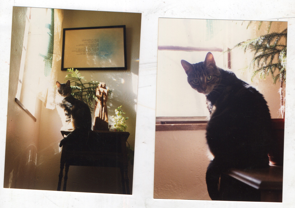 tabby cat on table in the sun