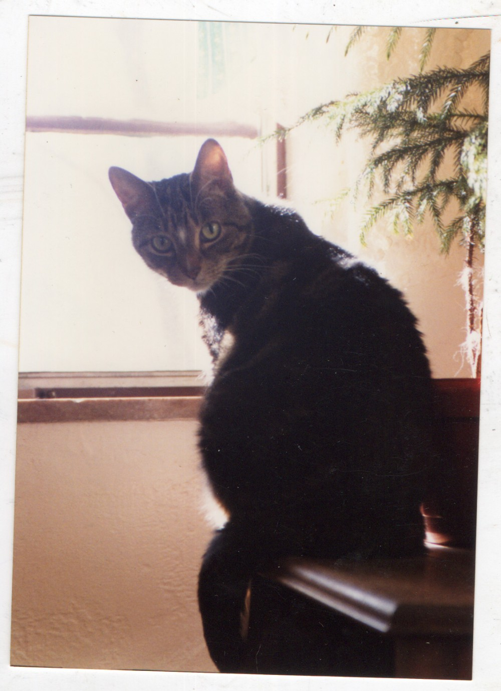 Tabby cat on table by window