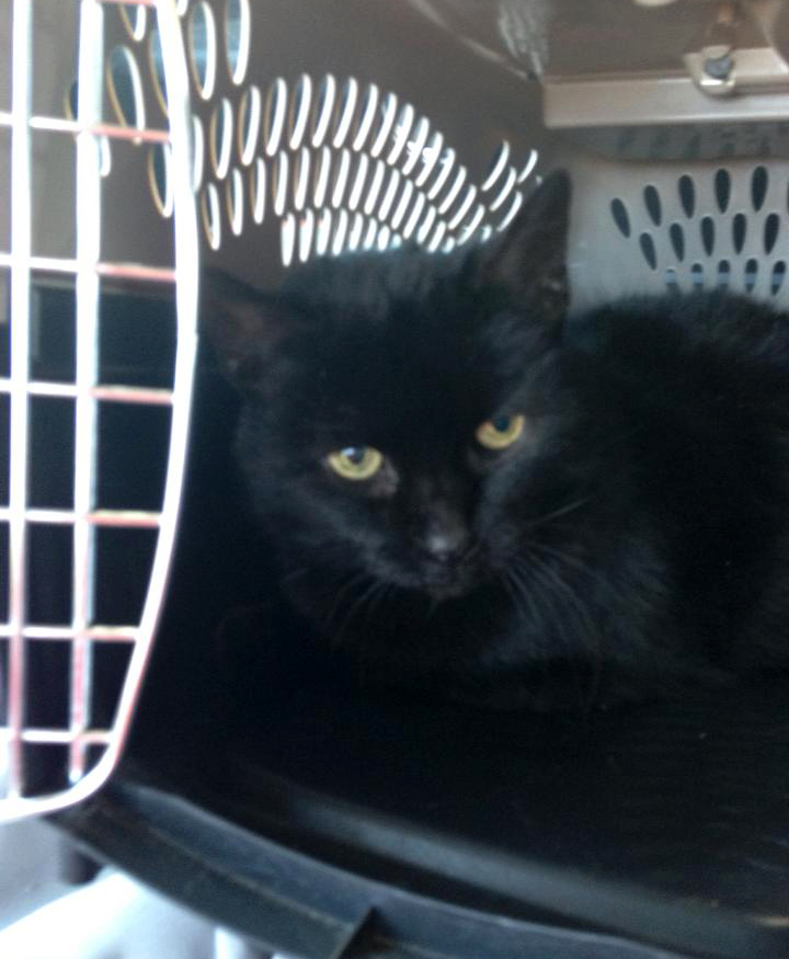 black cat in carrier