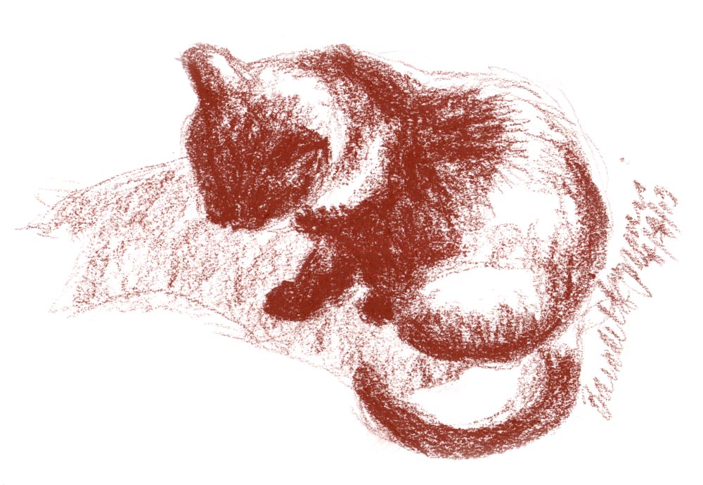 conte sketch of cat in sun