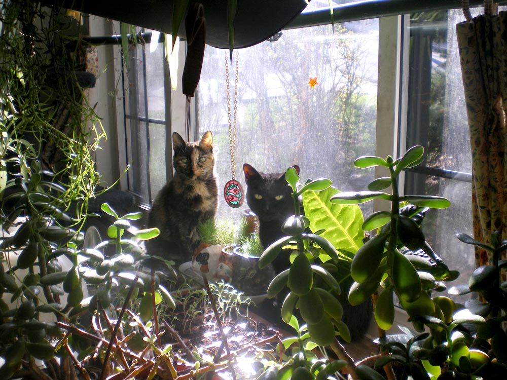 Living green with pets bringing plants indoors the for Indoor gardening with cats