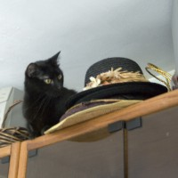 black cat with hats