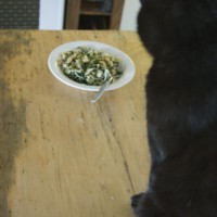 black cat with beans and greens