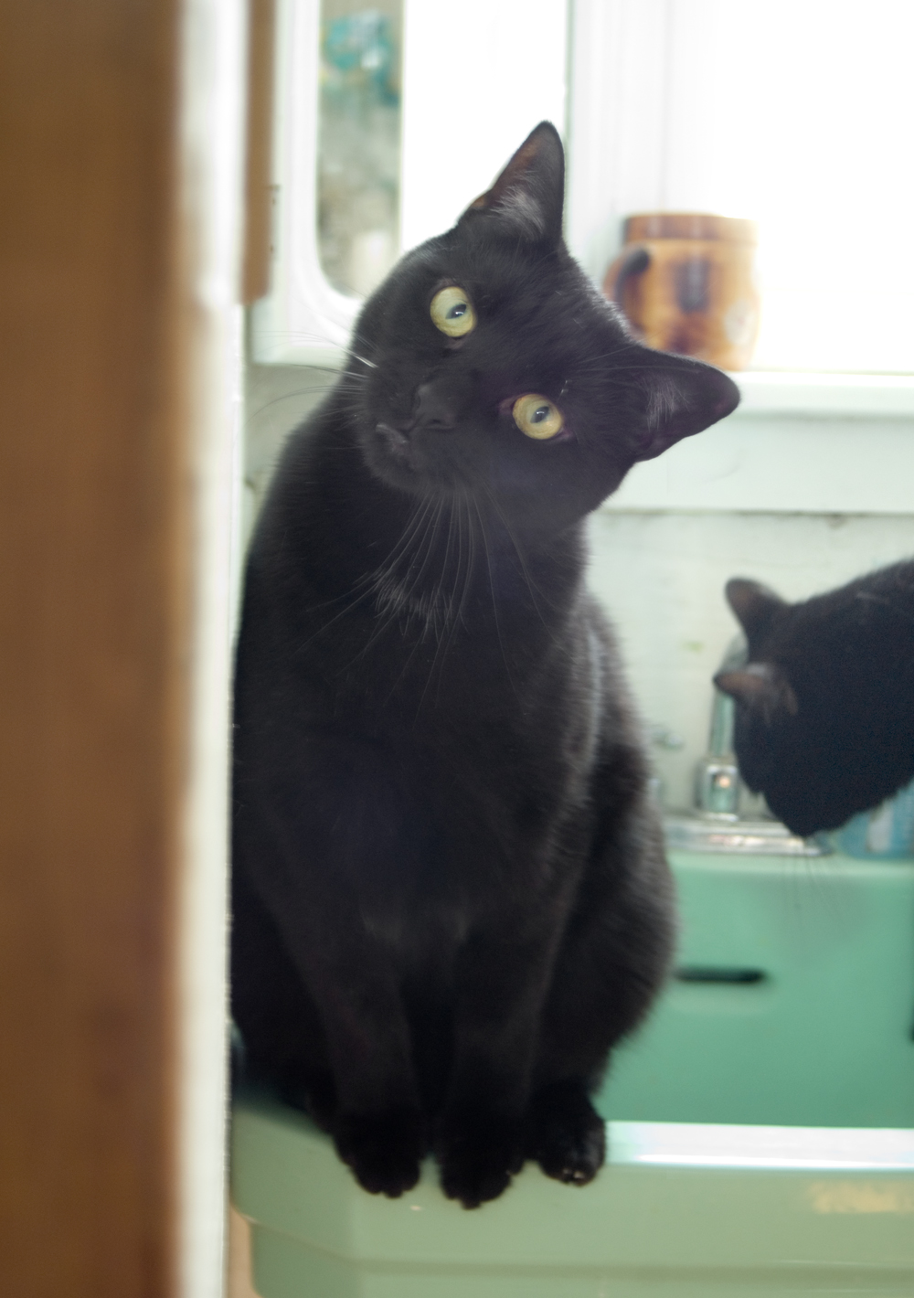 black cat on green sink.