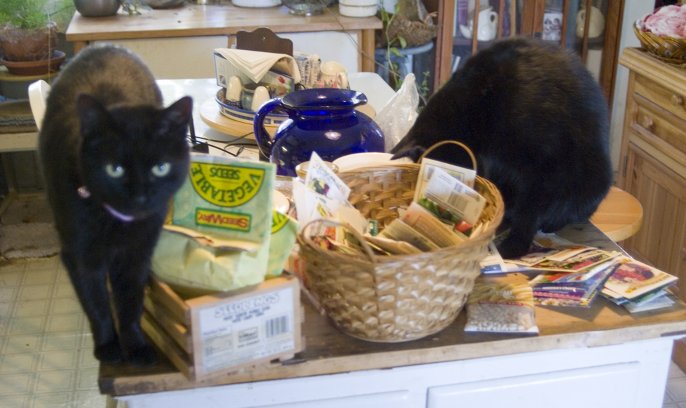 black cats with garden seeds