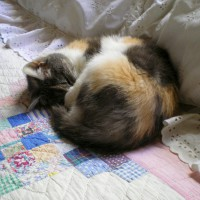 calico cat sleeping on quilt