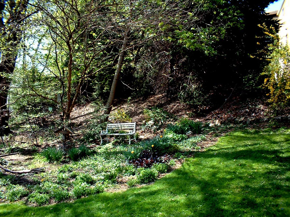 back yard with bench in spring