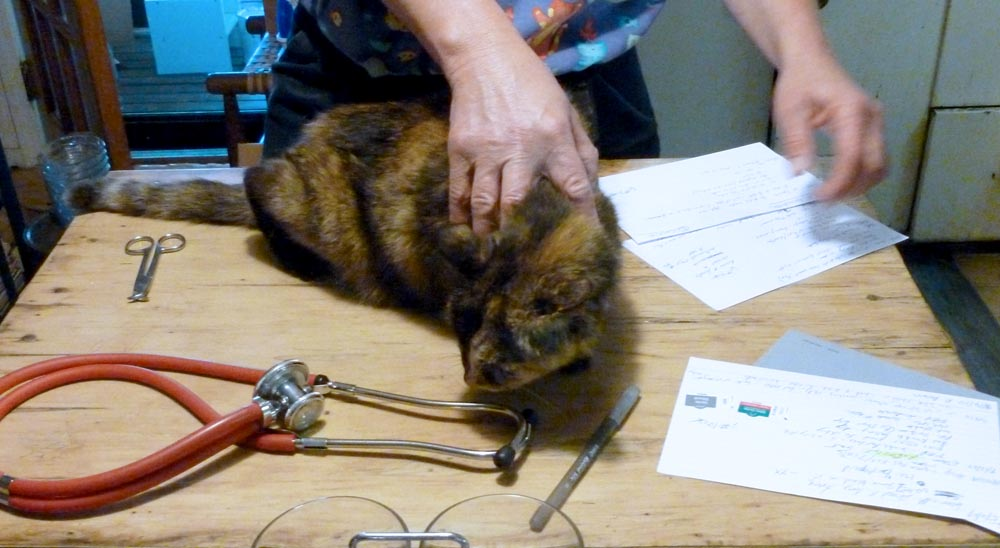 Records, stethescope, tortoiseshell cat—my veterinarian is ready to start our home exams, beginning with Cookie.