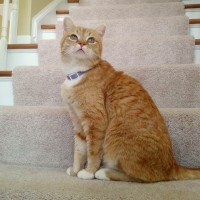 orange cat on steps.