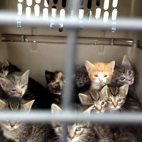 ten kittens in a carrier