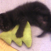 black kitten with catnip toy
