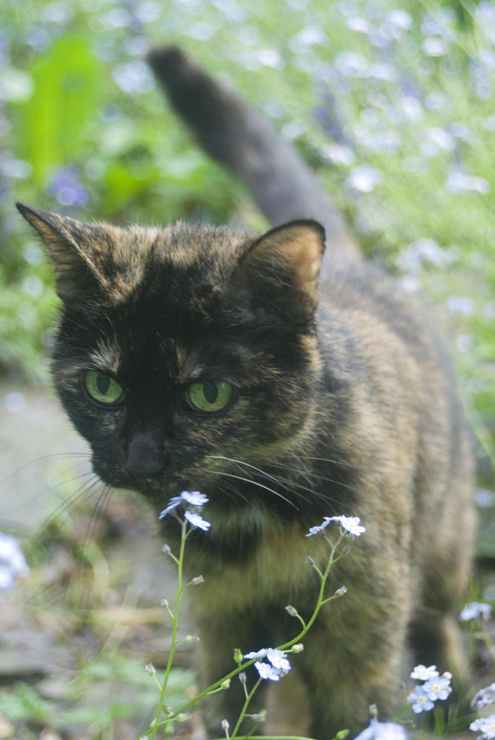 Daily Photo Reprise Kelly In Forget Me Nots 2012 The Creative Cat