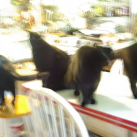 five black cats on table