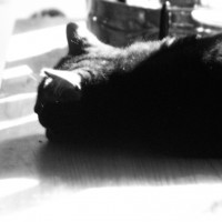 black cat in shadows
