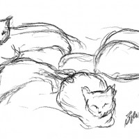 charcoal sketch of five cats