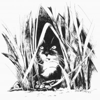 ink sketch of kitten in grass