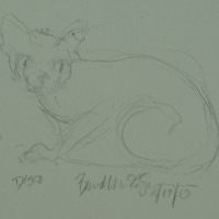 pancil sketch of cat