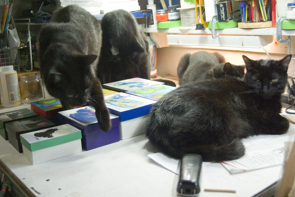 four black cats on table