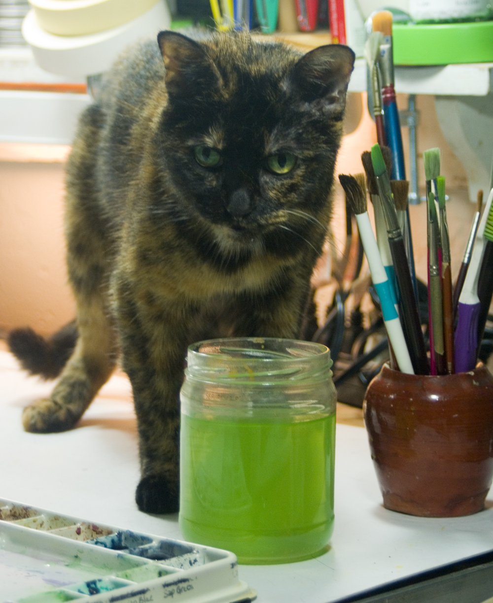 tortoiseshell cat with paint water