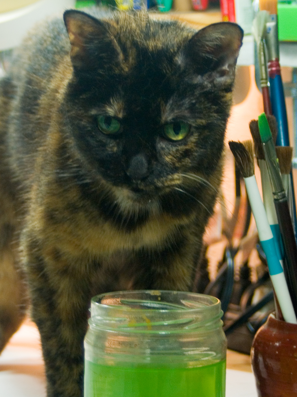 tortoiseshell cat with green paint water