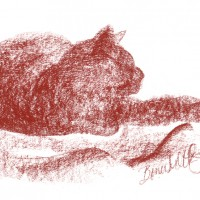 conte sketch of cat