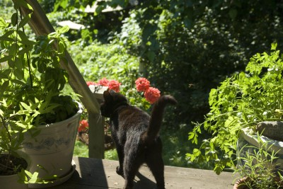 black cat with flowers
