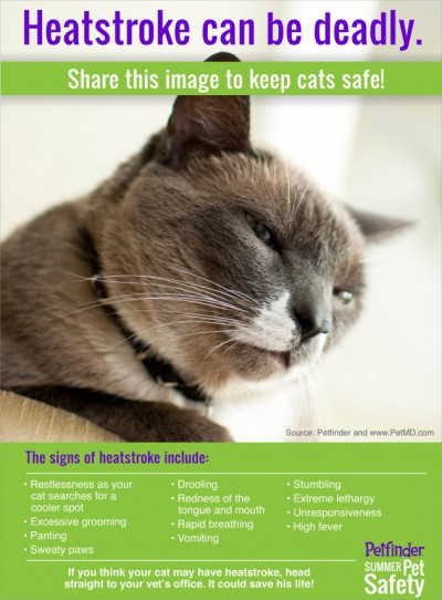 infographic on pets and heatstroke