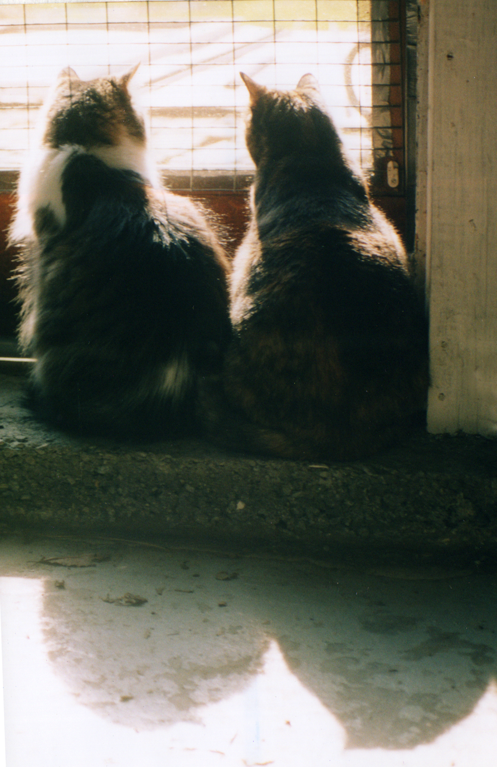 two cats looking out door