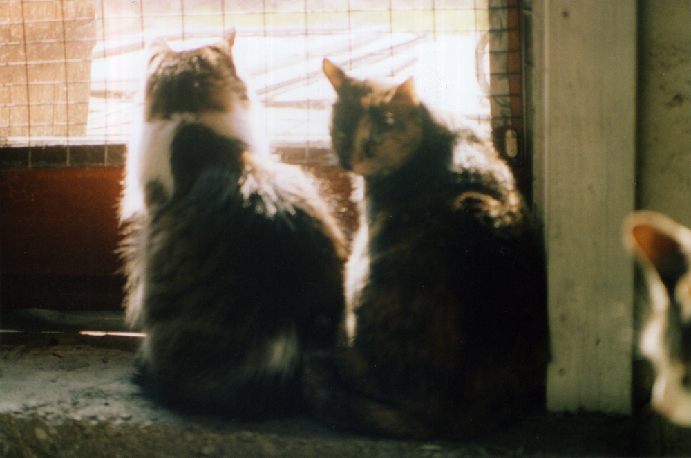 two cats looking out door.