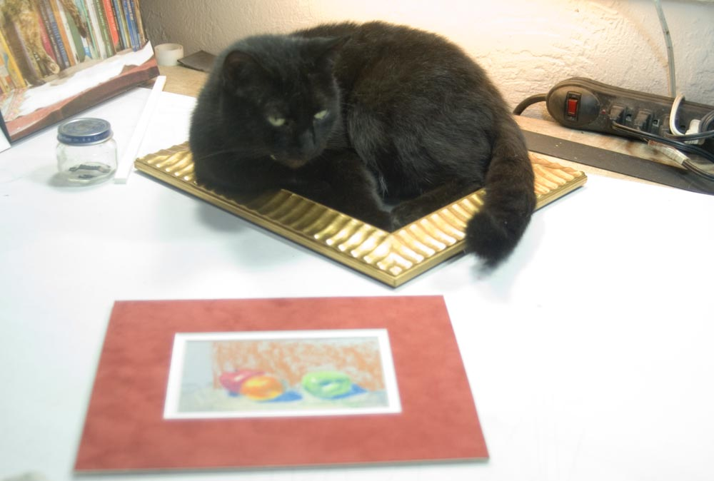black cat in picture frame