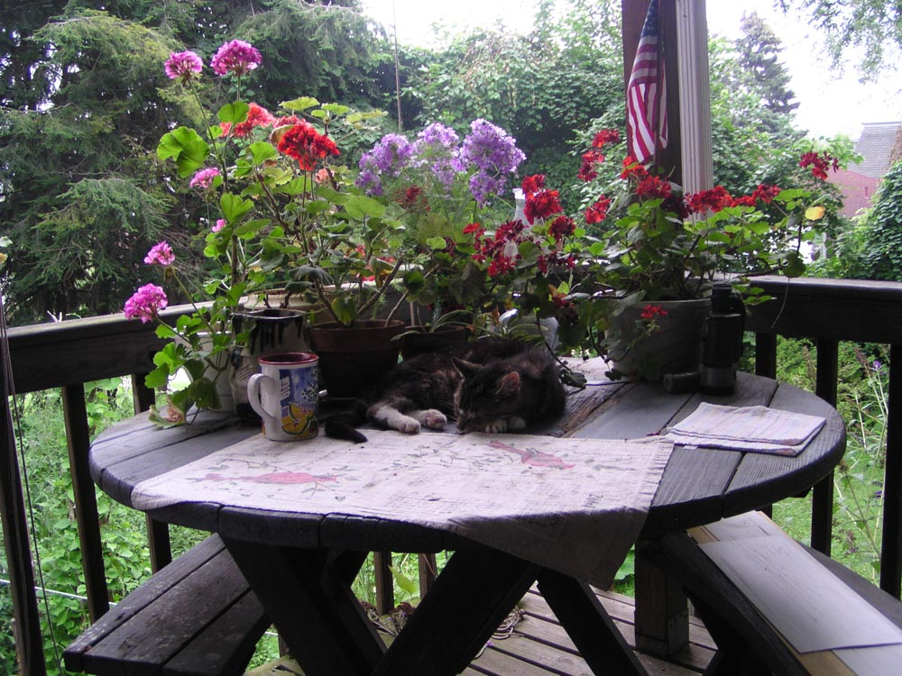 photo of cat on table with flowers
