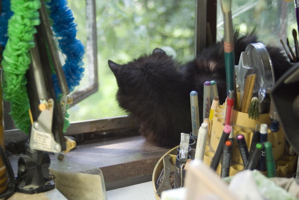 long-haired black cat on windowsill