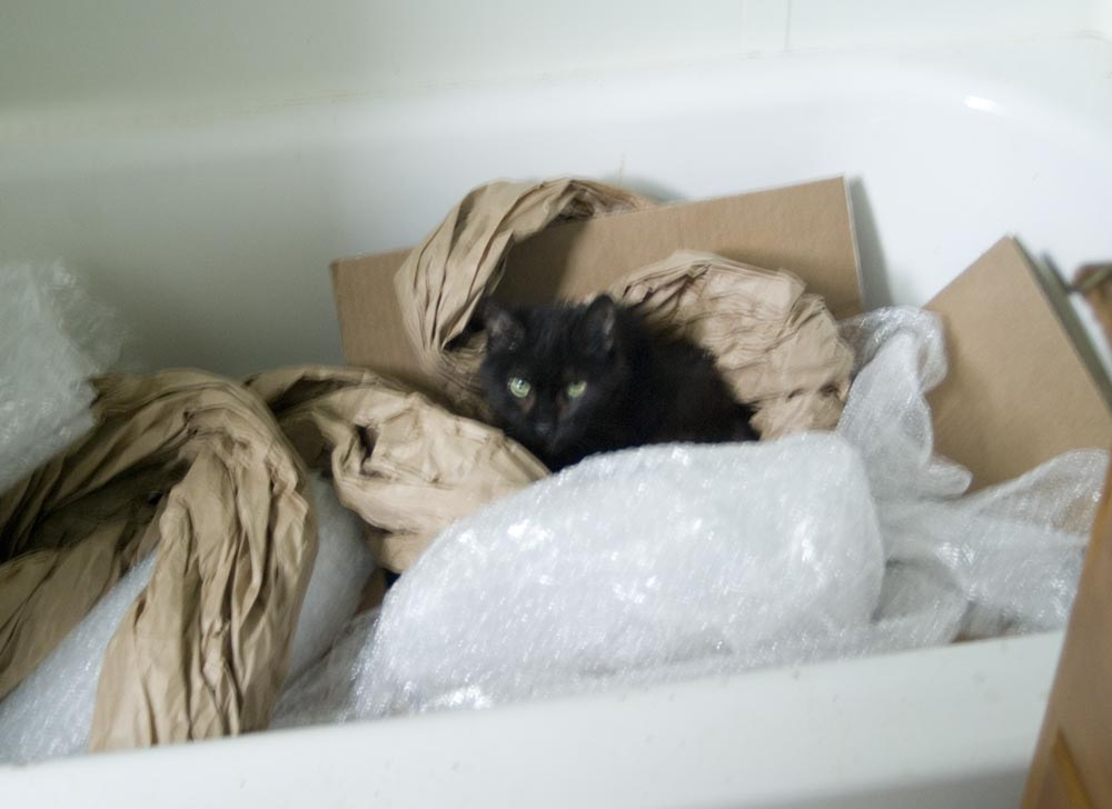 long-haired black cat in box