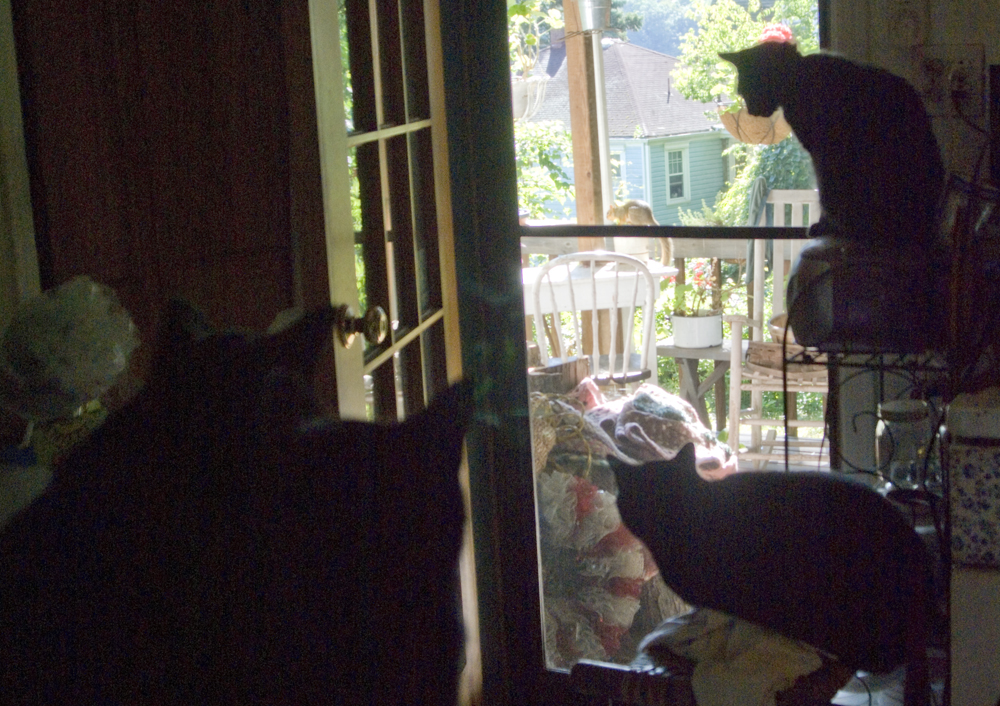 four black cats looking out a door