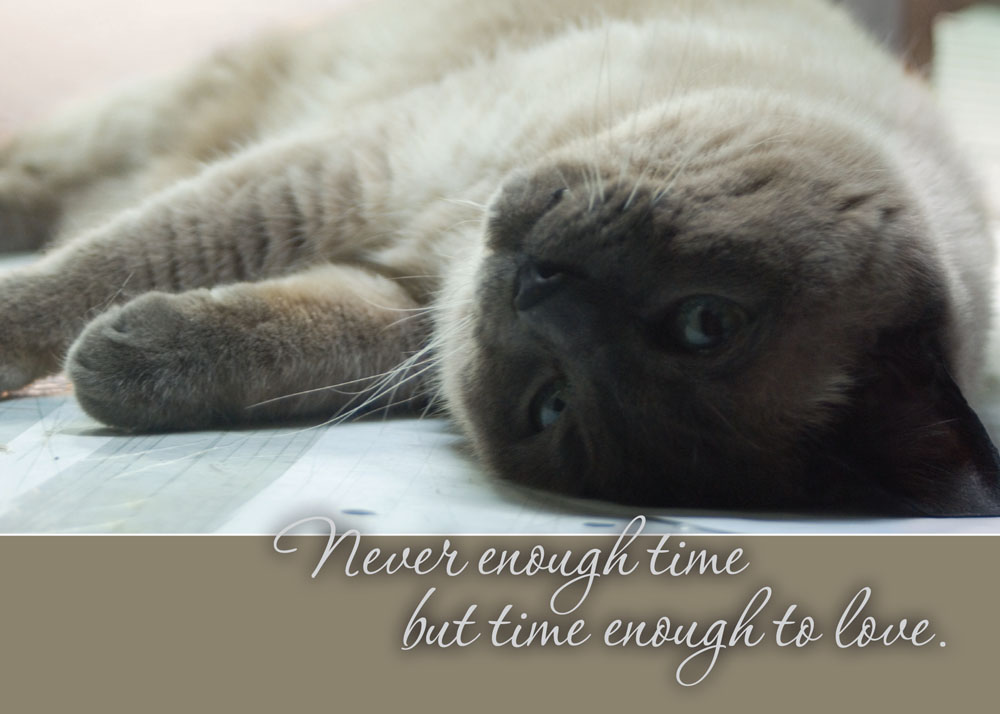 sympathy card with siamese cat Never enough time but time enough to love.