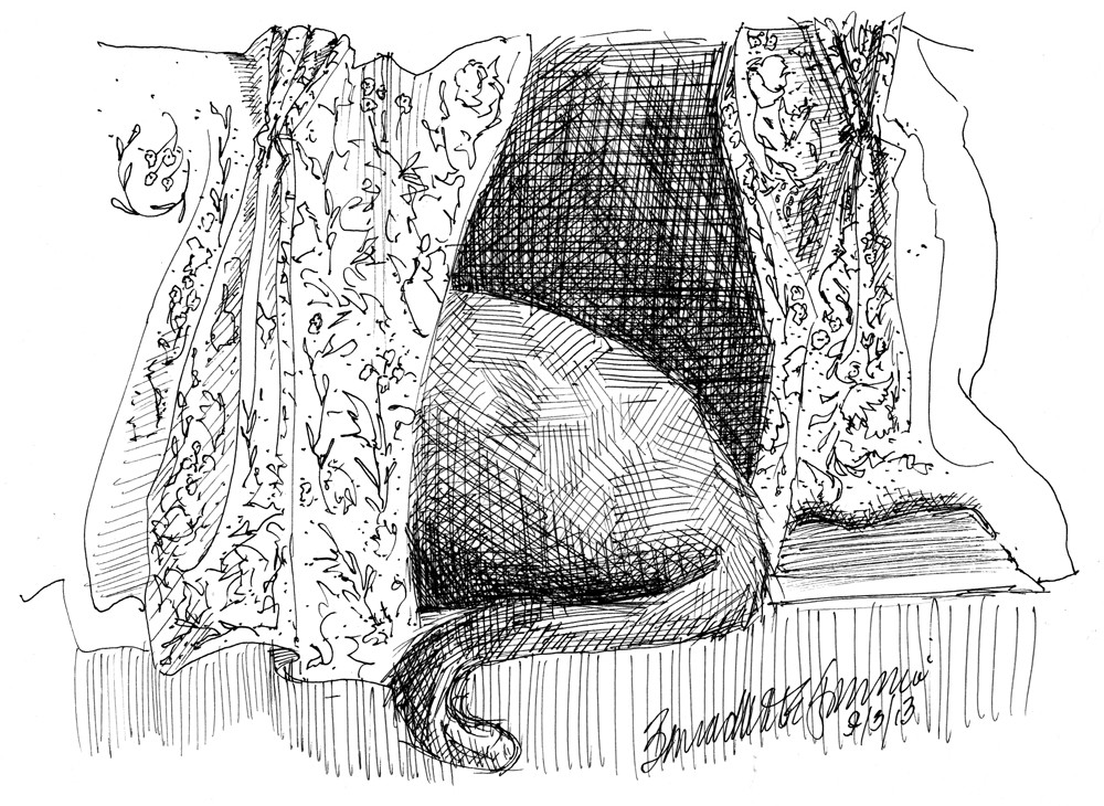 ink sketch of cat behind curtain