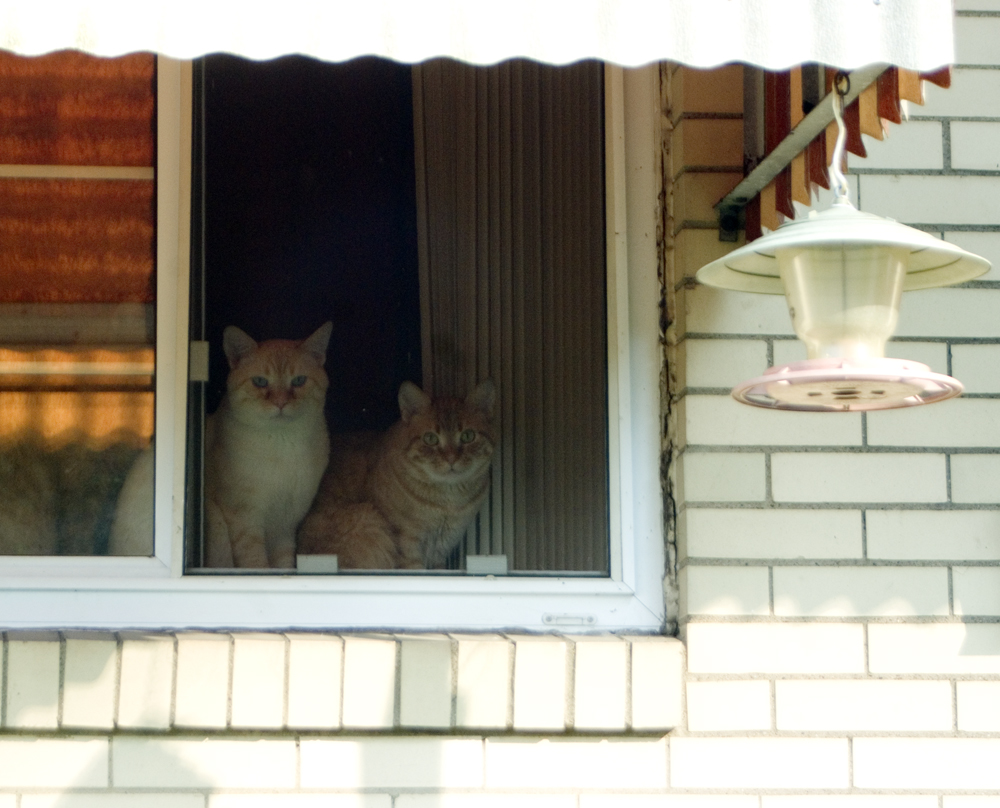 two cats in window