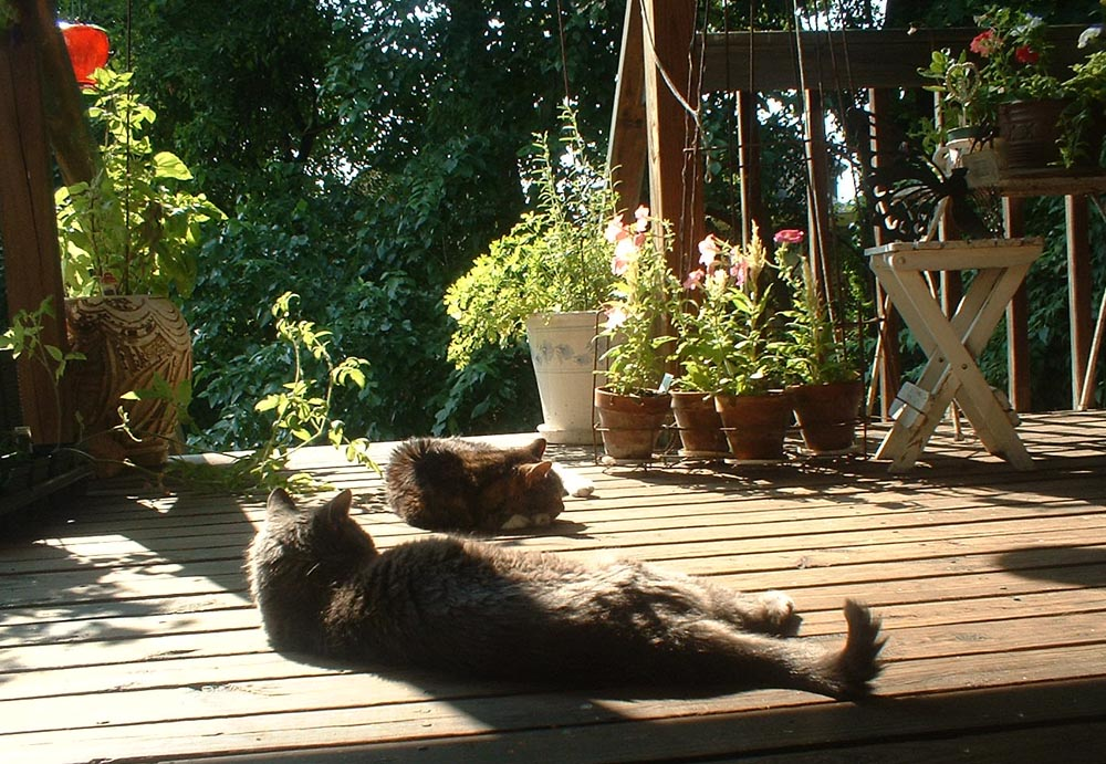 two cats on sunny deck
