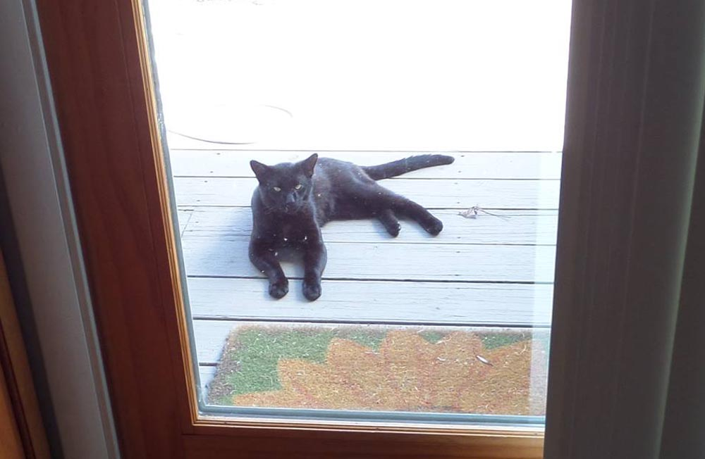 black cat outside door