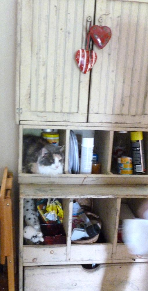 dilute calico in shelving